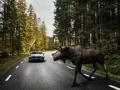 170841_Exterior_Large_Animal_Detection_Volvo_S90_2